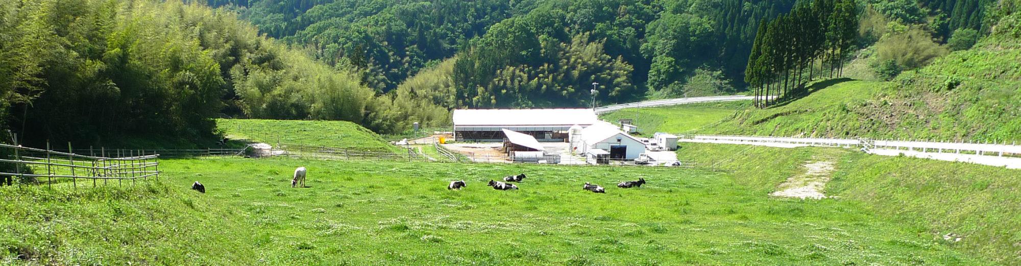 森と畑と牛と